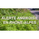 Ambroisie : attention aux allergies